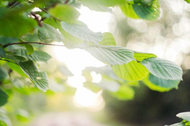 太陽に照らされる葉